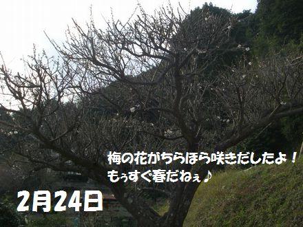 IMGP0827_3.jpg