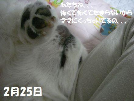 IMGP0895_3.jpg