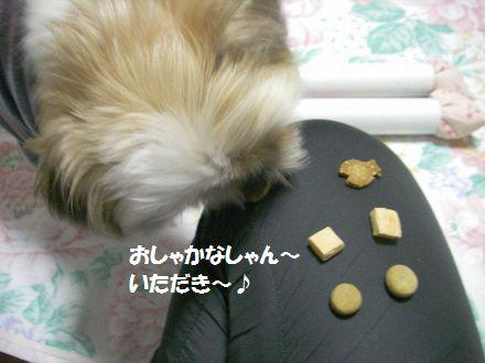 IMGP1464_3.jpg