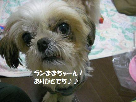 IMGP1502_3.jpg