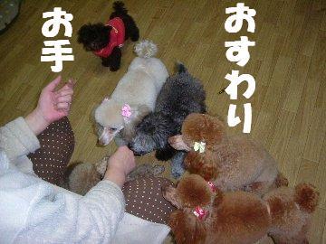 子犬パート3 010