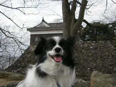 kameyama6.jpg