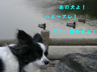 tori11.jpg