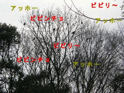 tori14.jpg