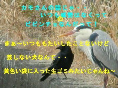 tori2_20080228172710.jpg