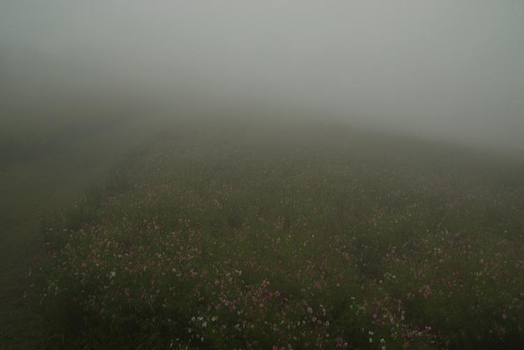 高原のコスモス園 2