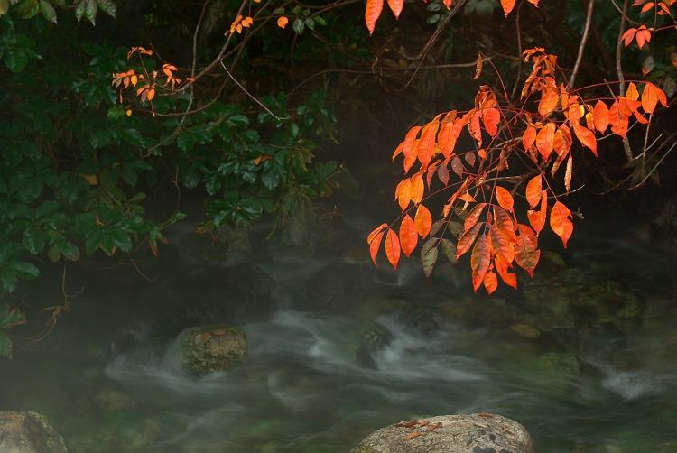 湯けむりの里 2  ~草津西の河原公園~