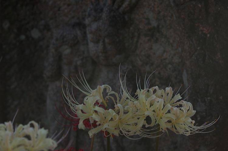 彼岸花の咲く頃 4