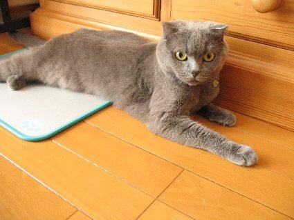 cat2011_07.jpg