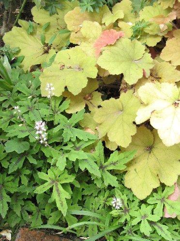 2011_06 garden