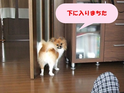 888_20110529121247.jpg