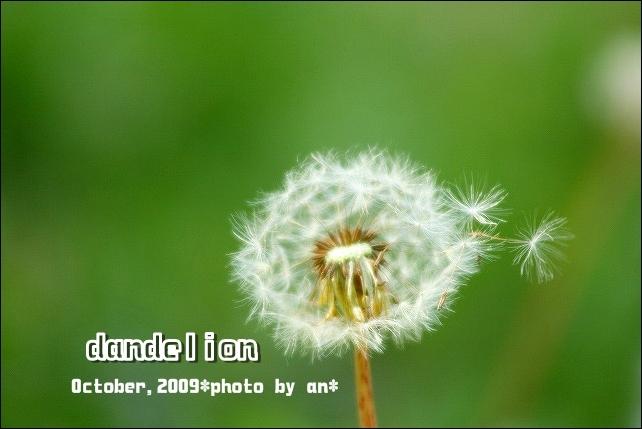 20091017_3928.jpg