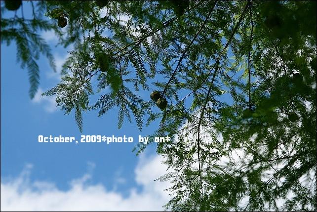 20091017_3959.jpg