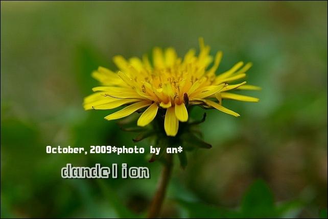 20091017_3981.jpg