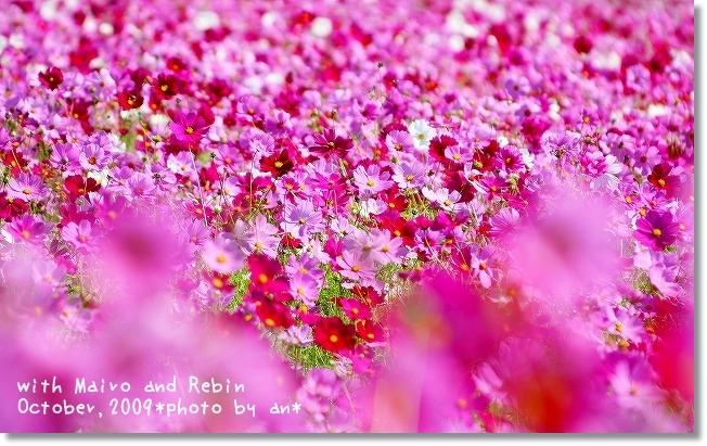 20091019_0024.jpg
