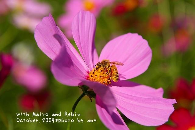 20091019_0062.jpg