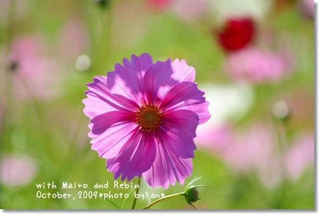 20091019_0107.jpg