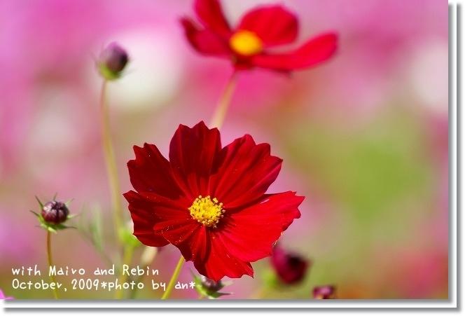 20091019_0121.jpg