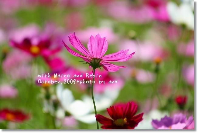 20091019_0156.jpg