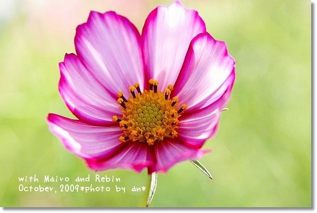20091019_0217.jpg