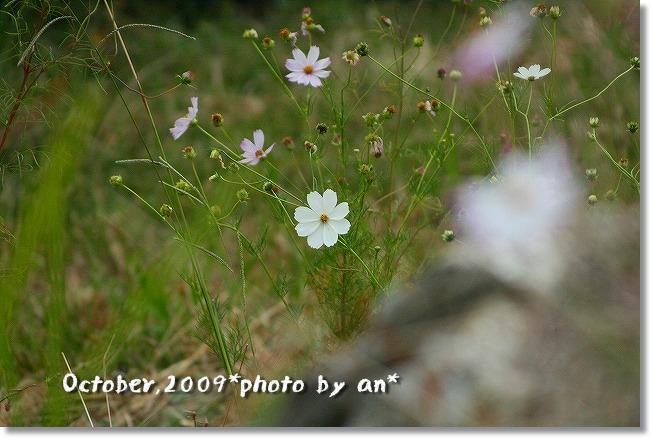 20091024_0979.jpg