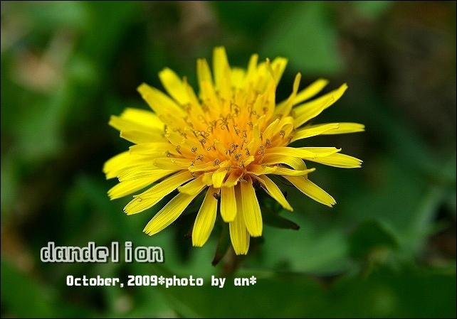 20091017_3796kkk (1)