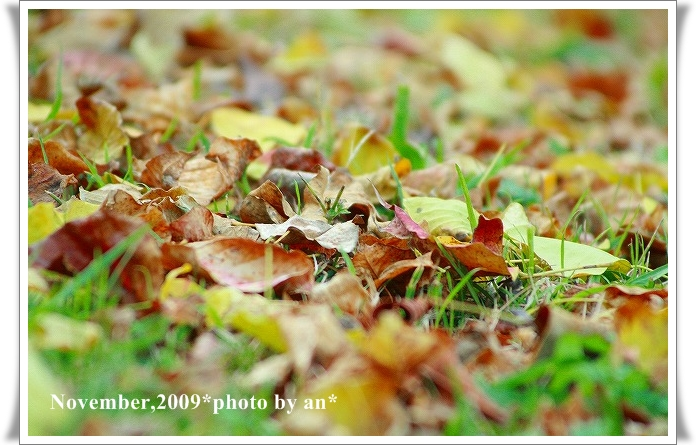 20091108_3575.jpg