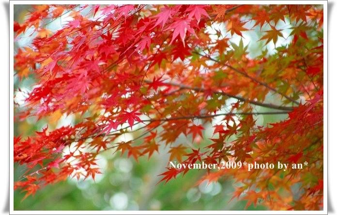 20091108_3583.jpg