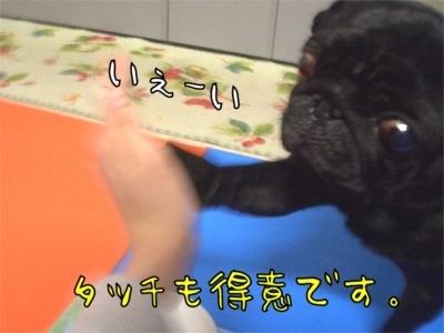 08.3.8.5ラン丸
