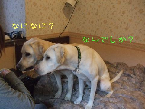 2009_10205gatu0044.jpg