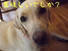 2009_10205gatu0067.jpg