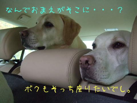 2009_10205gatu0095.jpg