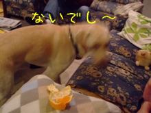 2009_11105gatu0018.jpg