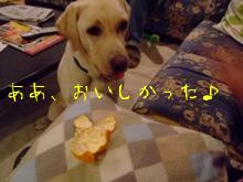 2009_11105gatu0023.jpg