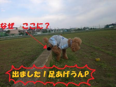 CIMG4039.jpg