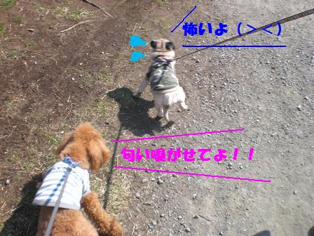 CIMG4178.jpg