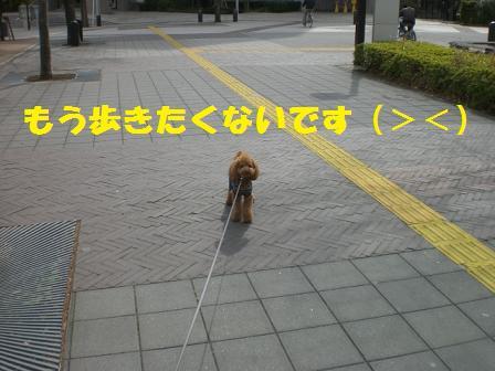 CIMG4284.jpg