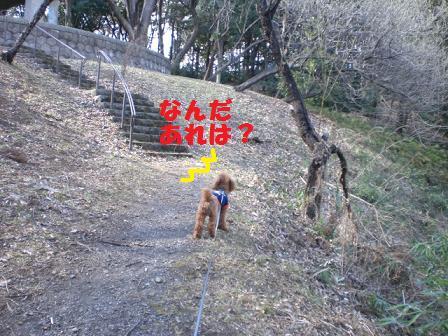 CIMG4494.jpg