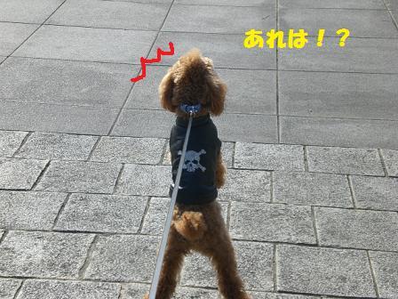 CIMG4638.jpg