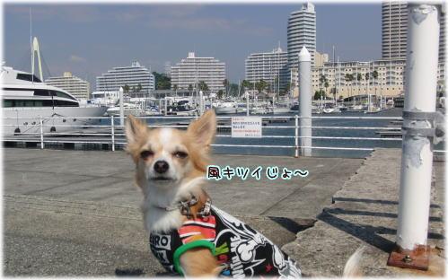 09-09 散歩