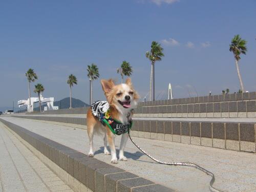 09-09 散歩 2