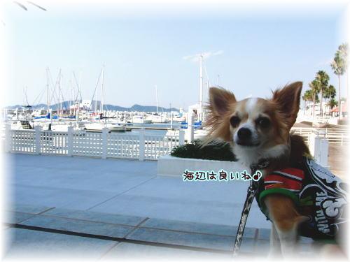 09-09 散歩 4