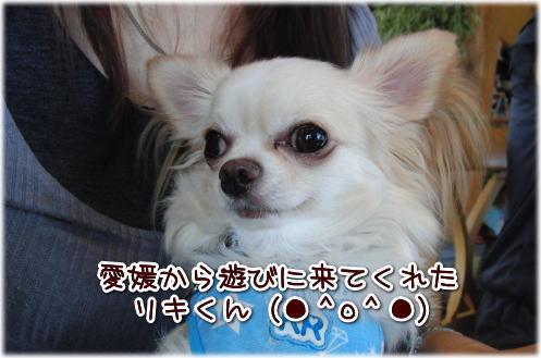 09-09 いらっしゃい 2