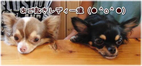 09-09 いらっしゃい 4