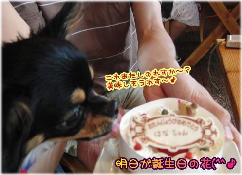 09-09 いらっしゃい 5