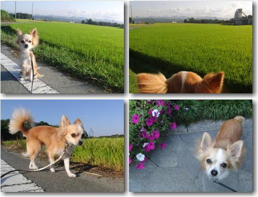 09-09 みーちゃんの運動会 1