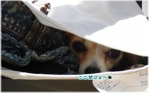 09-09 みーちゃんの運動会 6
