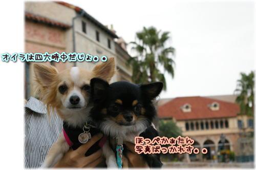 09-10 お散歩 3