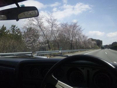 東名高速浜松付近の桜