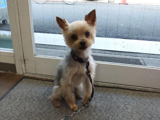 2011_0907保護犬0163
